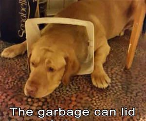 garbage can lid of shame funny picture