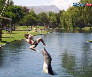 Gator Swing funny picture
