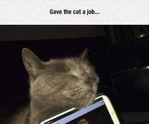 gave the cat a job
