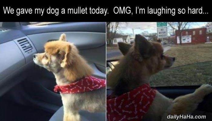 gave the dog a mullet funny picture