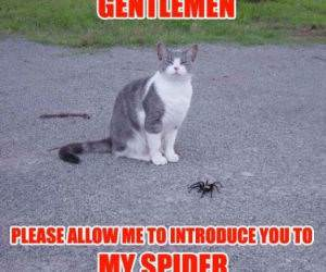 Gentlemen, My Spider
