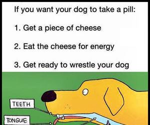 getting a dog to eat a pill