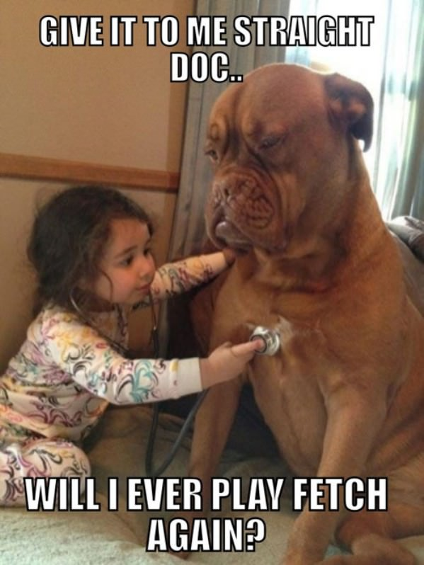 Will I Play Fetch funny picture