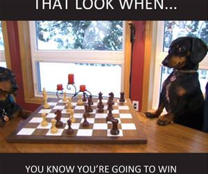 going to win funny picture