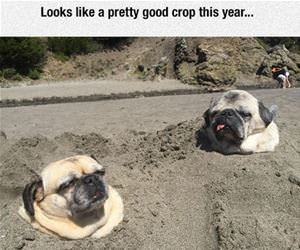good crop this year funny picture