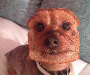 Half Dog Half Bread funny picture