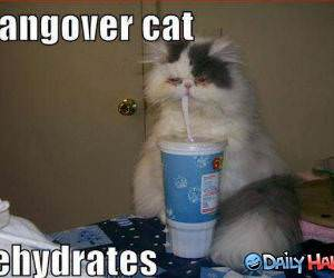 Hangover Cat Funny picture