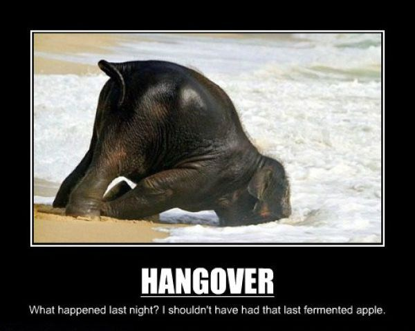 Hangovers funny picture