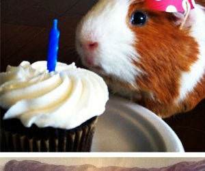 happy birthday animals funny picture