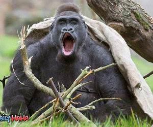 Happy Yelling Monkey