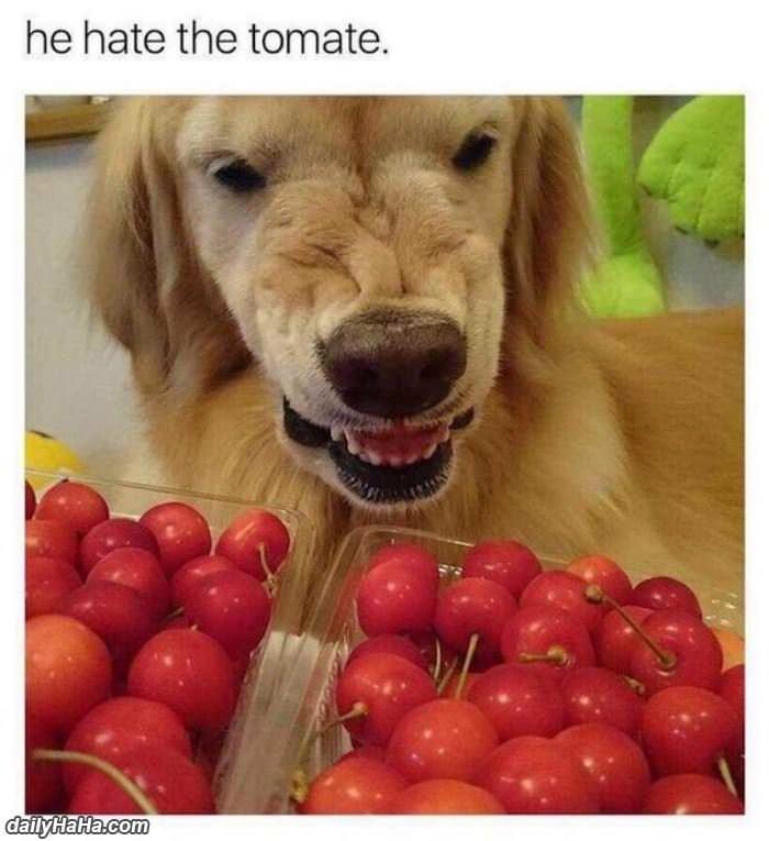 Dog Hates Dog Food