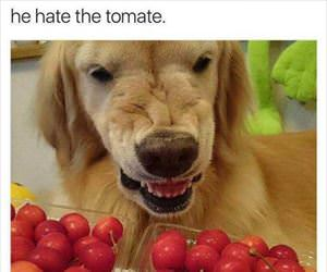 he hate the tomate