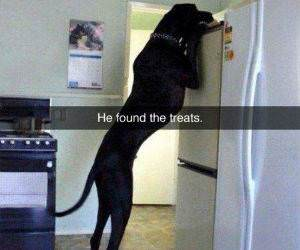 he found the treats funny picture