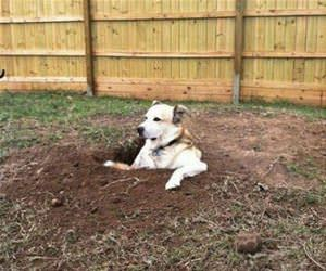 he loves digging holes funny picture