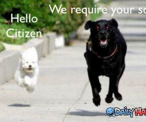 Hello Citizen funny picture