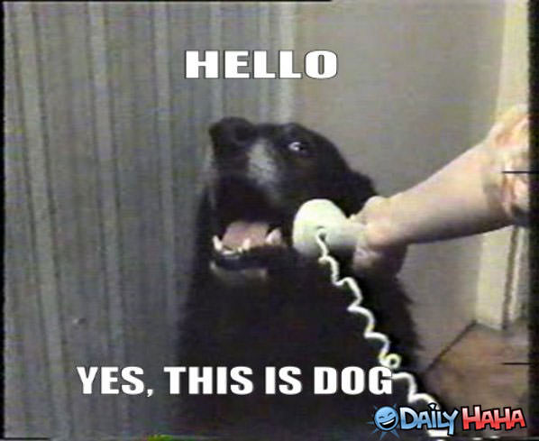 Why_Hello_There_funny_picture
