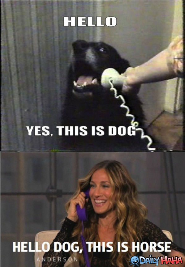 Funny Meme Hello : Why hello there doggy