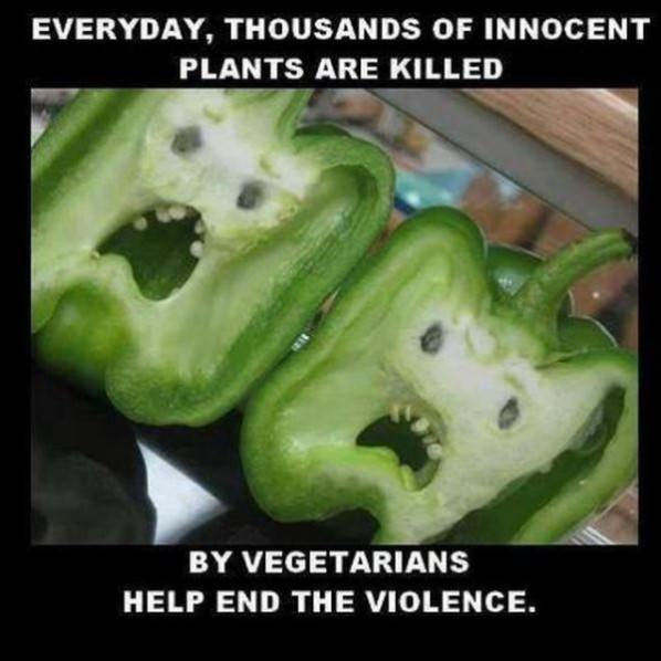 Stop Violence funny picture