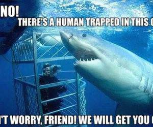 Helpful Shark funny picture