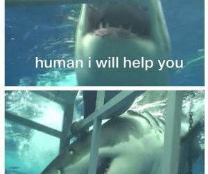 A Helpful Shark funny picture
