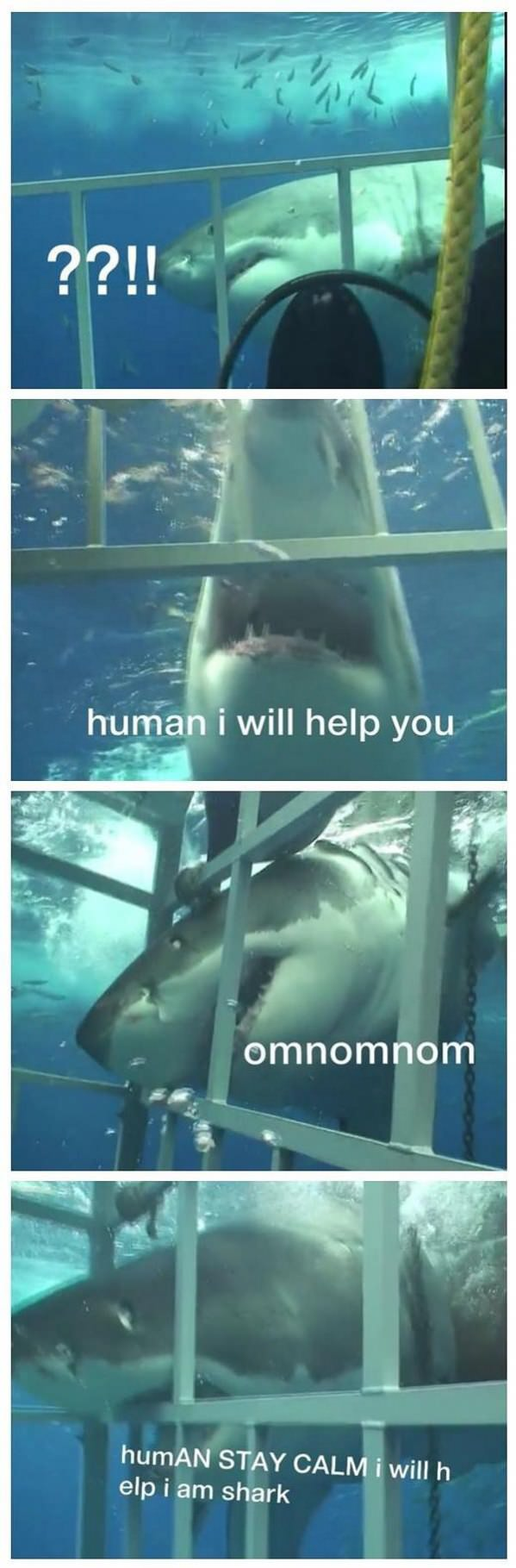 helpful-shark1.jpg