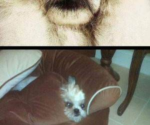 Hide and Seek Dogs funny picture