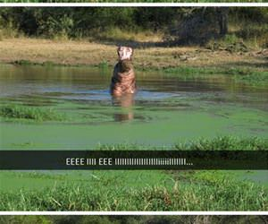 hippo singing his favorite song funny picture