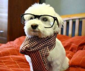 Hipster Dog funny picture