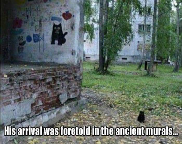 his arrival was foretold funny picture
