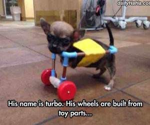 his name is turbo funny picture