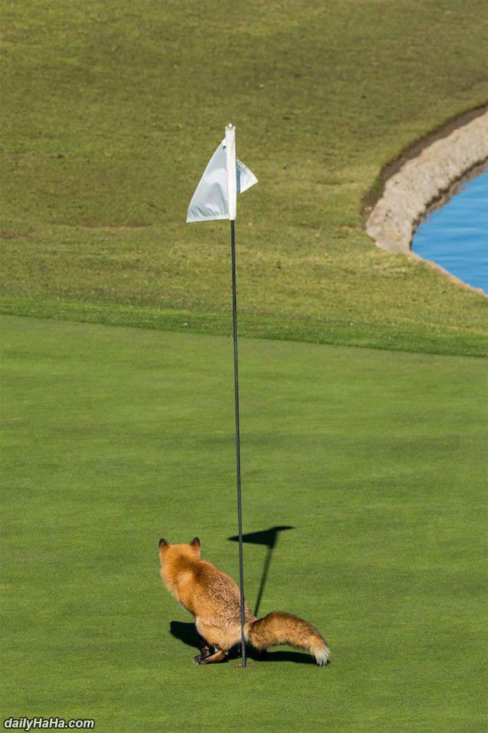 hole in one for the fox funny picture