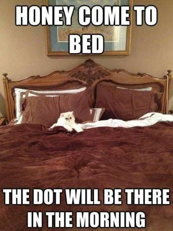 honey come to bed funny picture