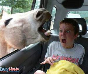 Horse Scares Kid