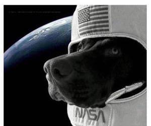 houston we have a good boy funny picture