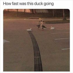 how fast was this duck going ... 2
