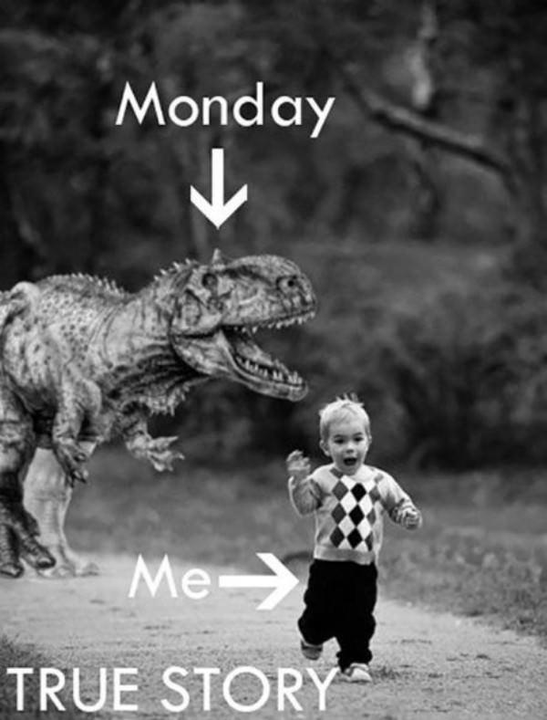 Funny Monday Work Meme : How mondays work