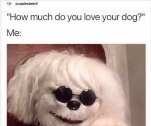 how much do you love your dog ... 2