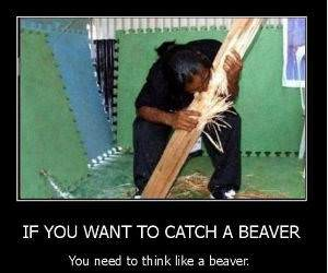 Catch A Beaver funny picture