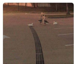 how fast was this duck going funny picture