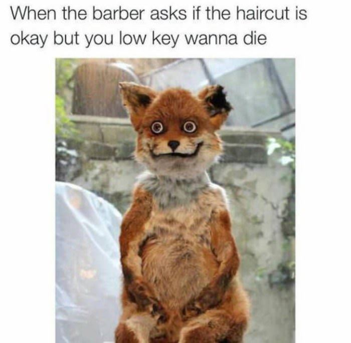 how is your haircut funny picture