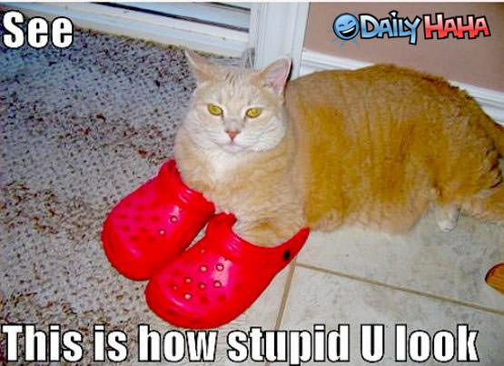 How stupid you look