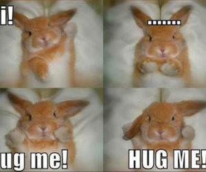 HUGS NOW funny picture