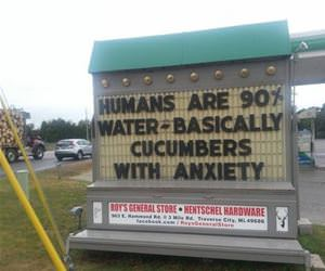 humans are cucumbers funny picture