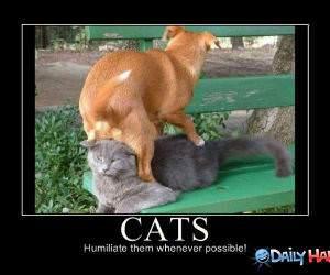 Humiliate Cats funny picture