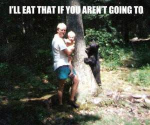 Hungry Bear funny picture