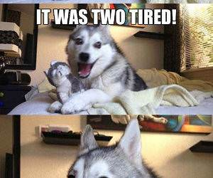 husky bike joke funny picture