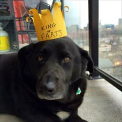 i am the king of farts