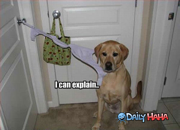 Funny Pictures I-can-explain
