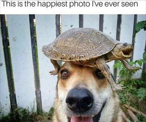 i have a turtle hat