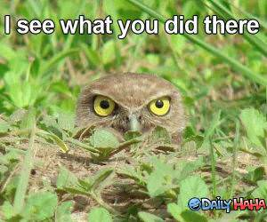 I See You funny picture